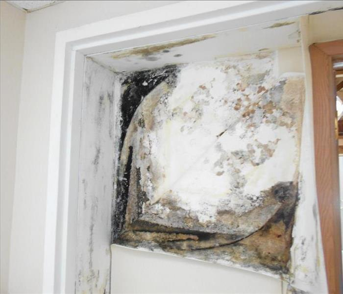 Mold Remediation in Fayette County